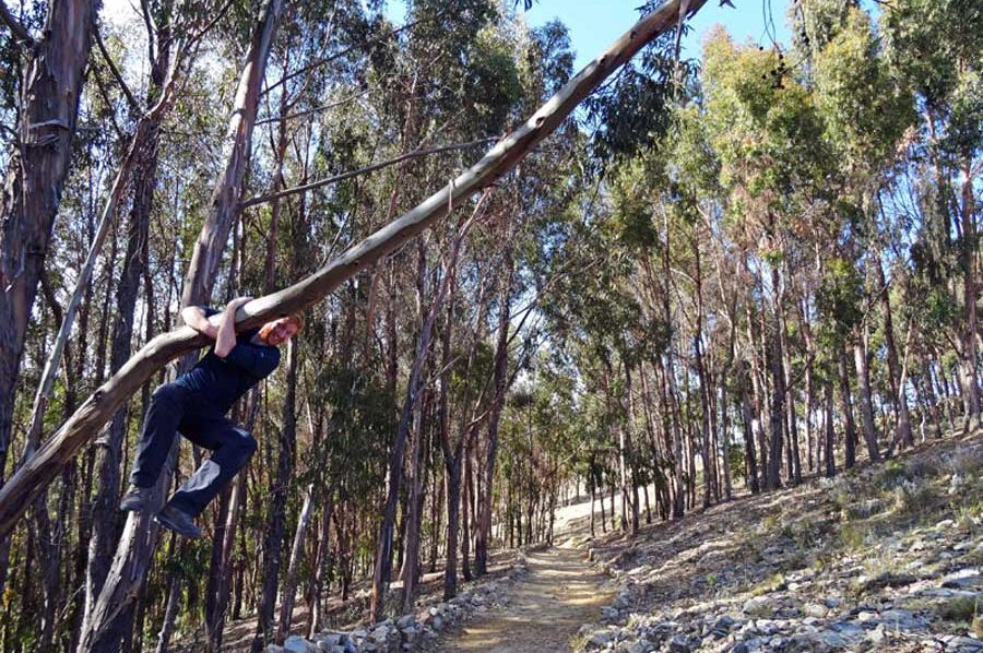 Der steinige Weg führt durch lichten Eukalyptuswald
