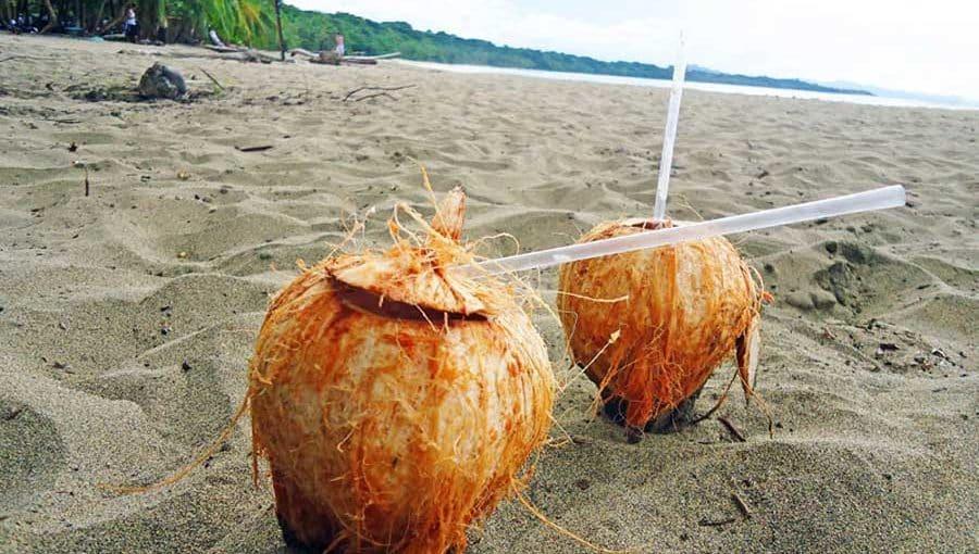 Frische-Kokosnuesse