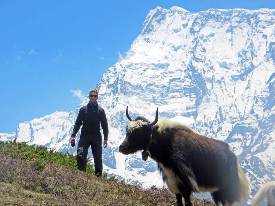 Annapurna Circuit: Sebastian neben einem Yak