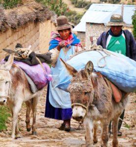 Hier wird alles auf Eseln transportiert