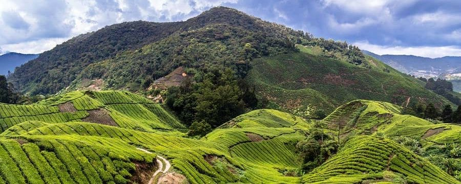 Die Cameron Highlands in Malaysia