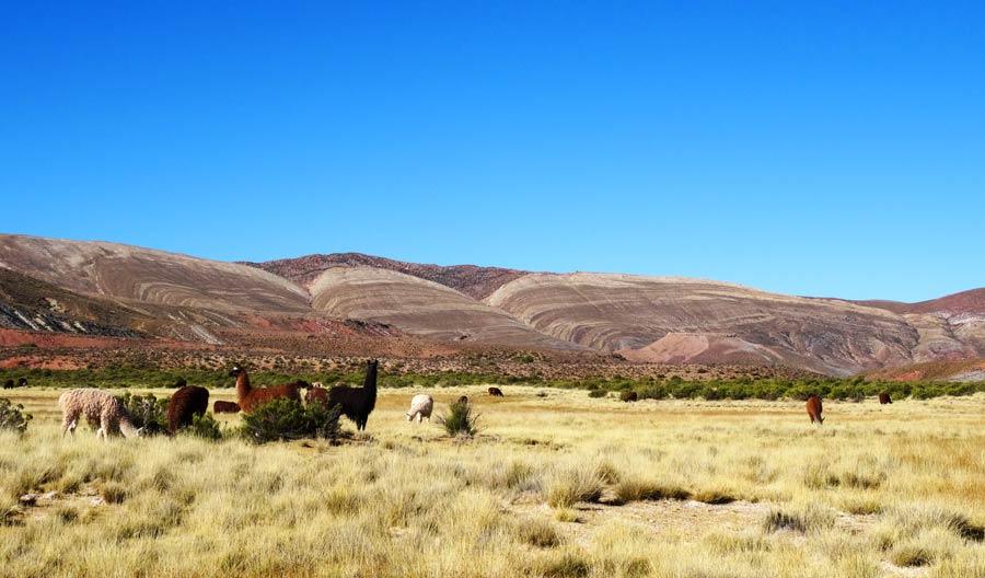 Auf unserer Trekking-Tour durchqueren wir zahlreiche wilde Lama-Herden.