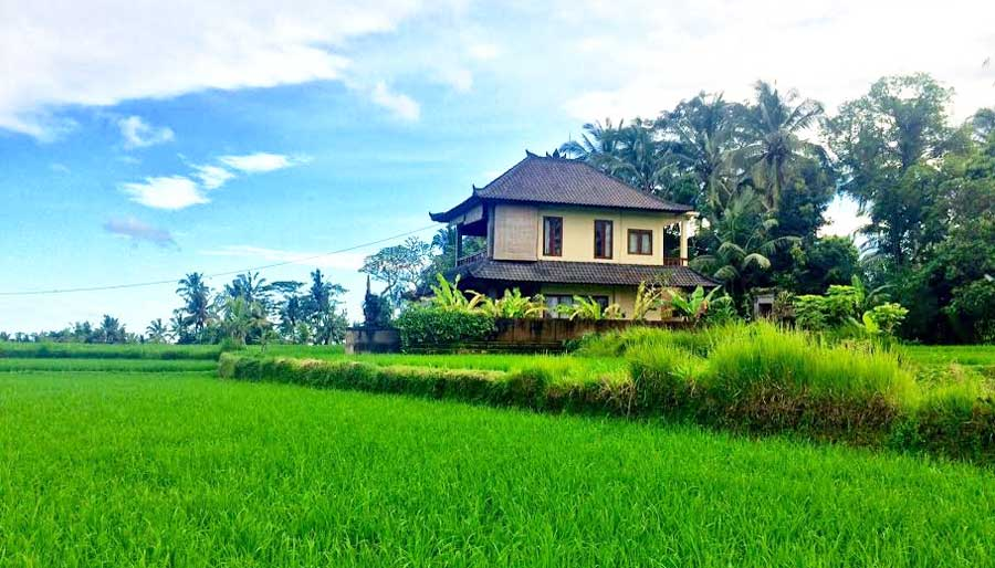 Bali Online Reiseführer: Die Reisterrassen von Ubud