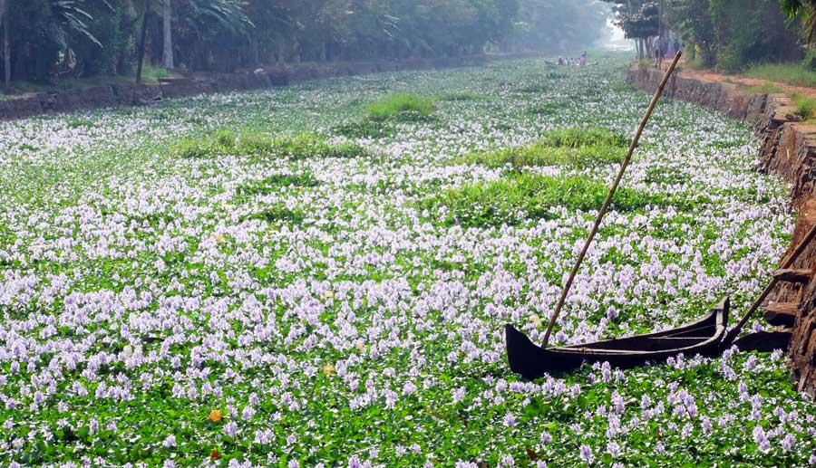 Indien Online Reiseführer: die Backwaters von Kerala