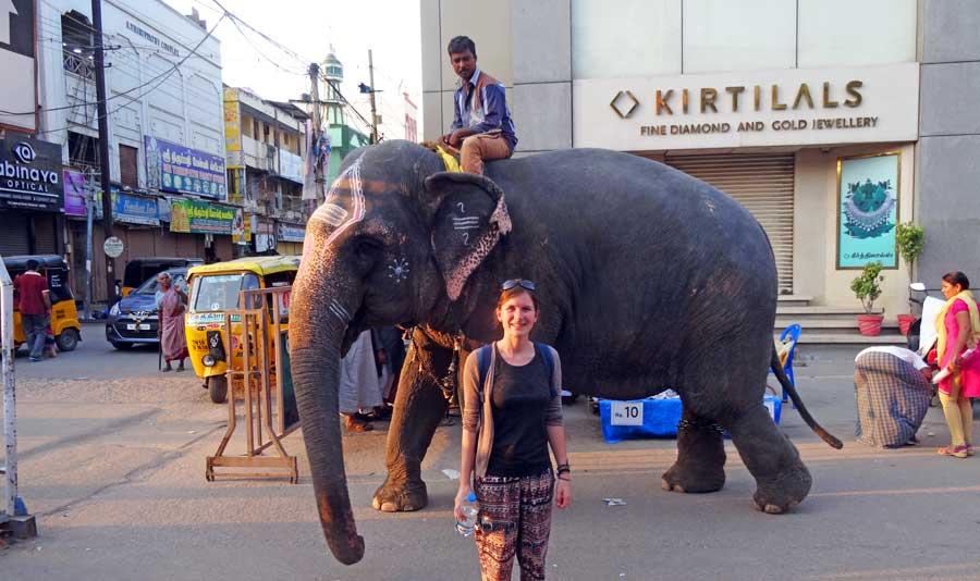 Indien Online Reiseführer: Ein Elefant in den Straßen von Madurai - Südindien
