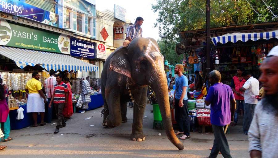 Indien Online Reiseführer: Ein Mahud in Madurai