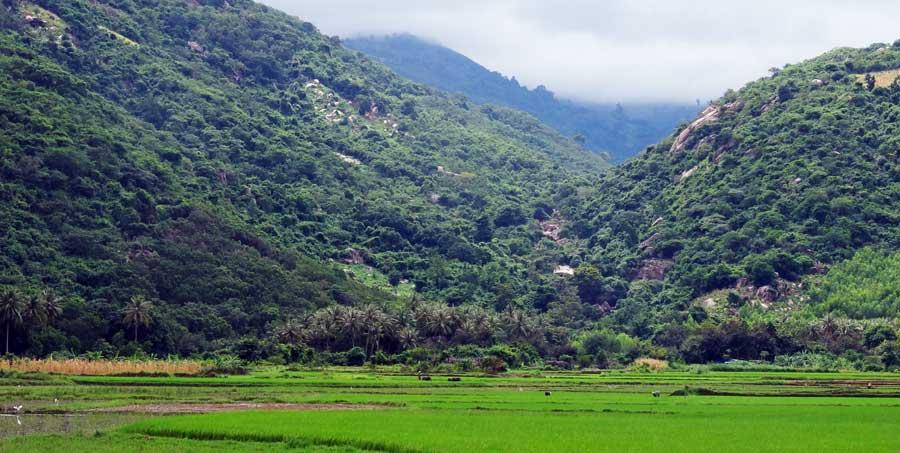 Vietnam Motorrad: Grüne Reisfelder