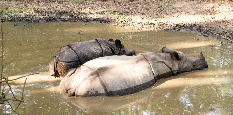 Aktivitäten Nepal: Chitwan Nationalpark