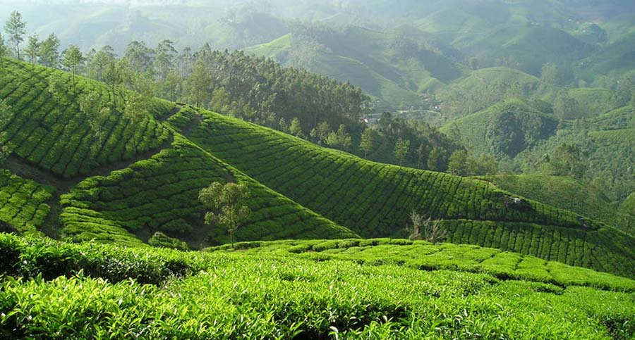 Malaysia Sehenswürdigkeiten: Cameroon Highlands