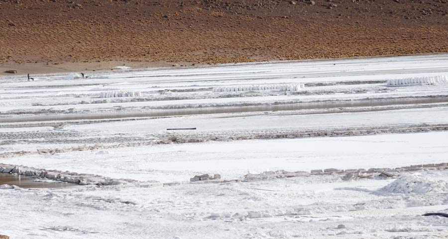 Salzebene mit Lithium, Flamingos, Vicuñas und Lamas - La Paz