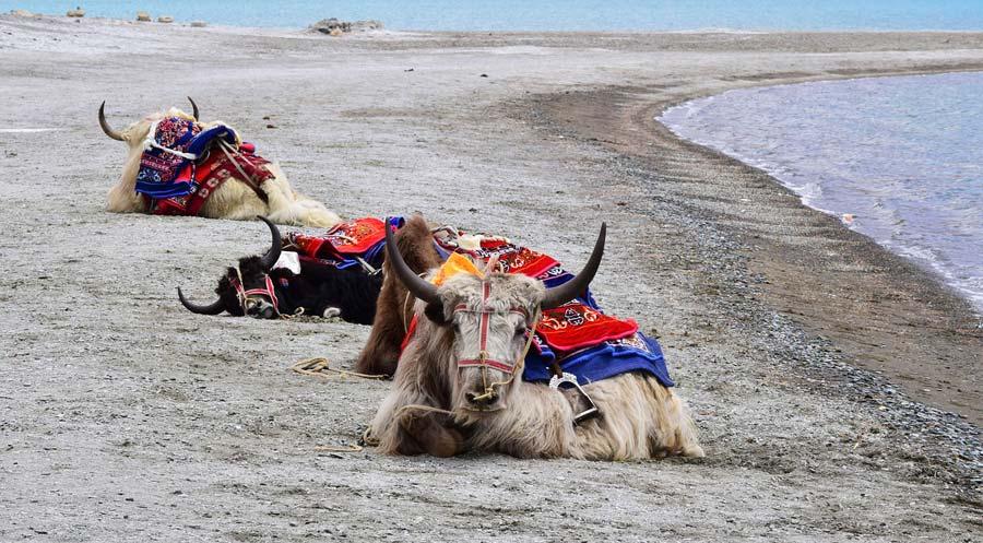 Indien Sehenswürdigkeiten: Ladakh - religiöse Tempel, architektonische Stätten, Tempel Cochin Mandir