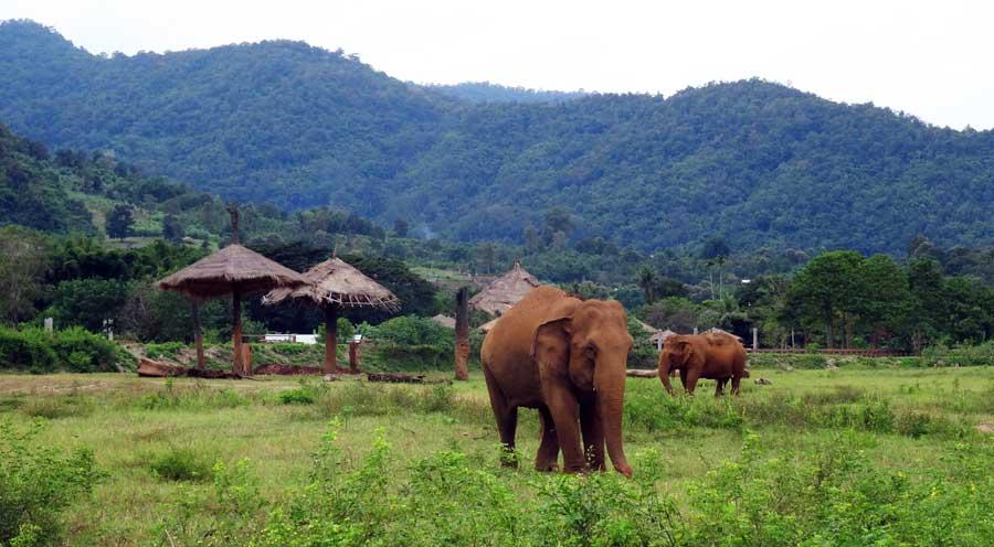 Chiang Mai Sehenswürdigkeiten: Elefanten Rescue Camp