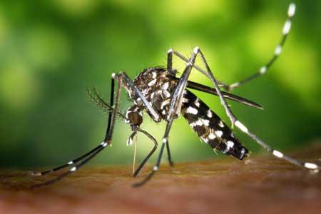Moskitonetz Reise: Mückenschutz Ratgeber Test
