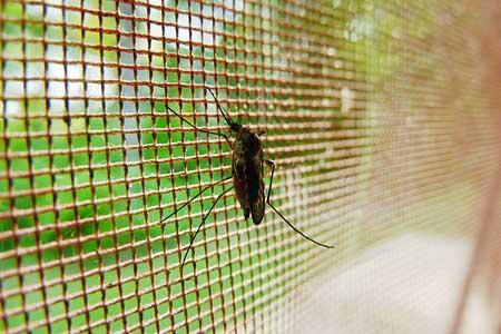 Mückenschutz Test & Ratgeber