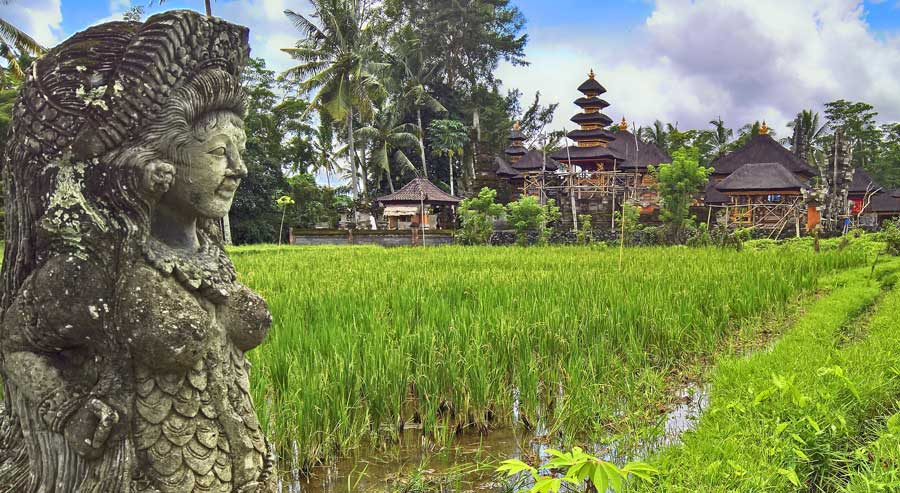 Reiseführer Bali: Tipps und Vergleich, inklusive Lombok - Reisterrassen Indonesien Südostasien