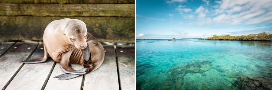 Galapagosinseln: Concha de Perla