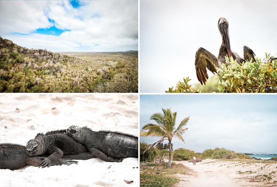 Galapagosinseln: Darwin Research Center