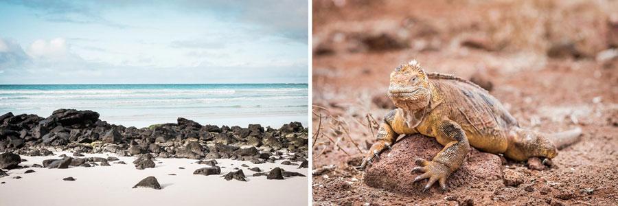 Galapagosinseln: Isla Isabela