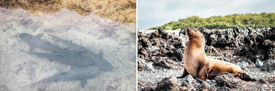Galapagosinseln: Las Tintoreras