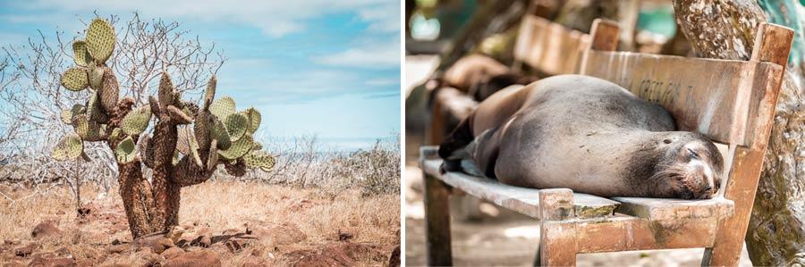 Galapagosinseln: Robben und Kakteen