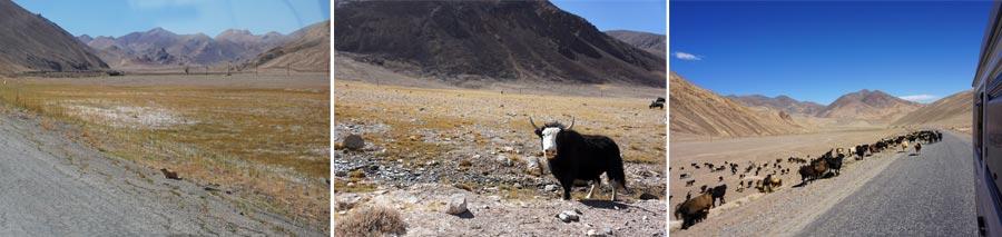 Pamir Highway: Tiere, Natur und Umwelt