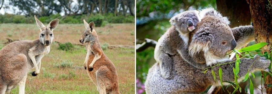 Visum Australien: Reisepass, Botschaft