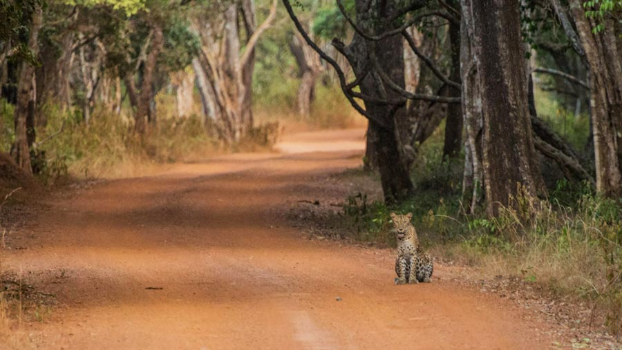 Sri Lanka Sehenswürdigkeiten: Willpatu Nationalpark