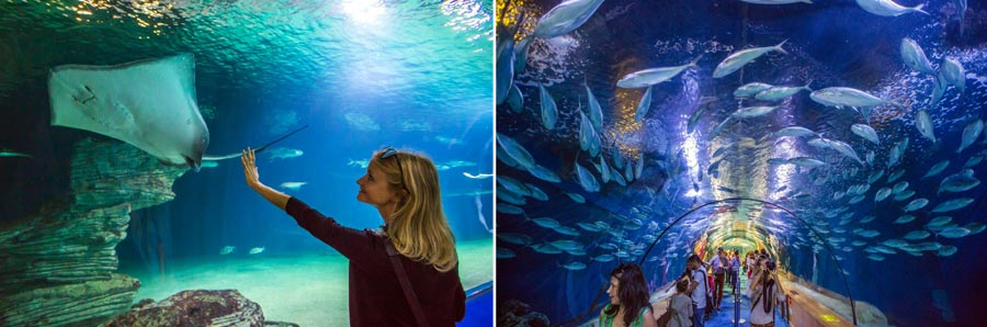 Valencia Sehenswürdigkeiten: Aquarium