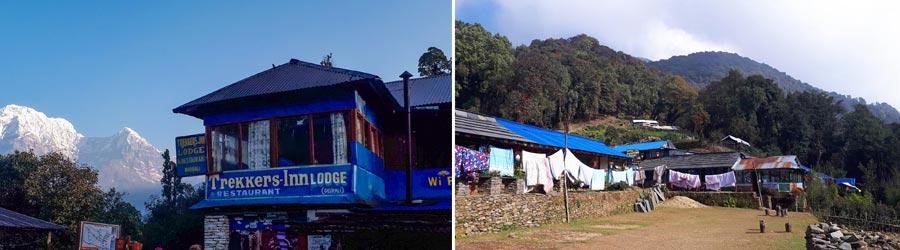 Mardi Himal Trek: Deurali, Forest Camp, Wald