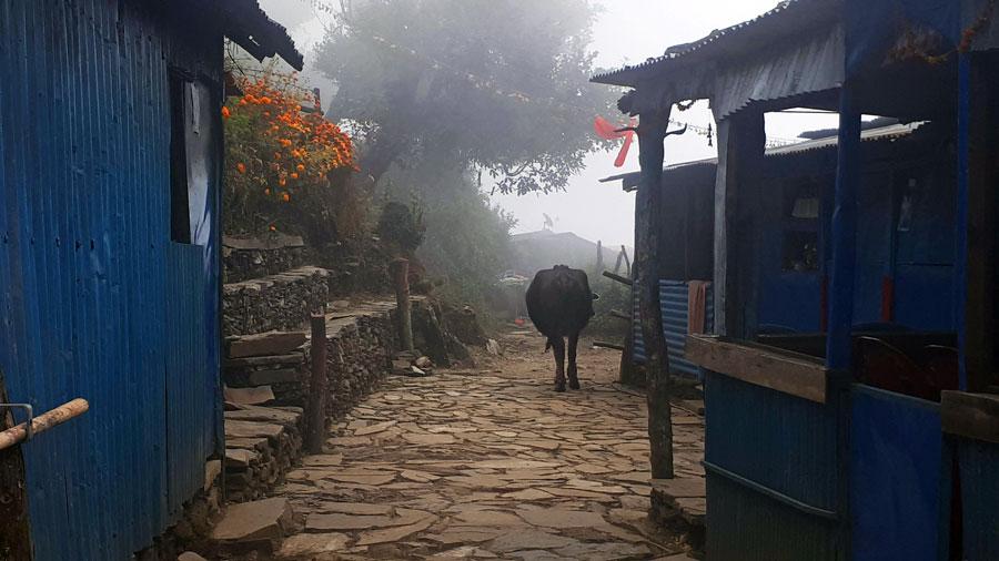 Mardi Himal Trek: Pokhara, Pothana