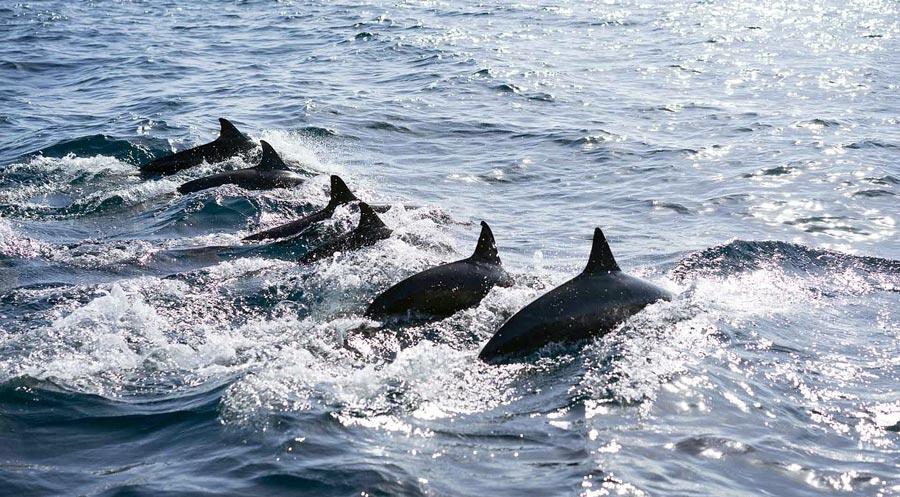 Bohol: Pamilican, Delfine, Meer