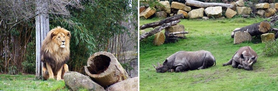 Leipzig Sehenswürdigkeiten: leipziger Zoo, Tiere
