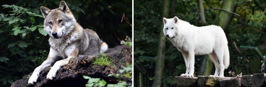 Nachhaltig reisen Saarland: Wolfspark Merzig