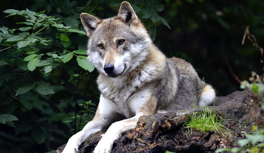 Saarland: Wolfspark Merzig, Werner Freund