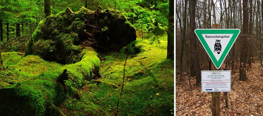 Nachhaltig reisen Saarland: Urwald vor den Toren der Stadt