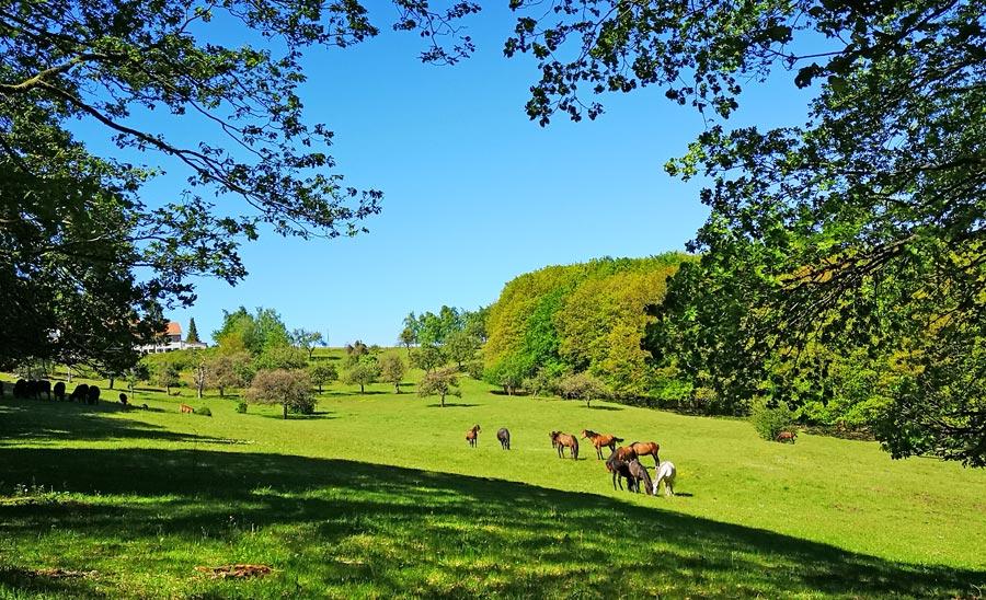Wanderwege Saarland: Pferde, Kühe, Koppel