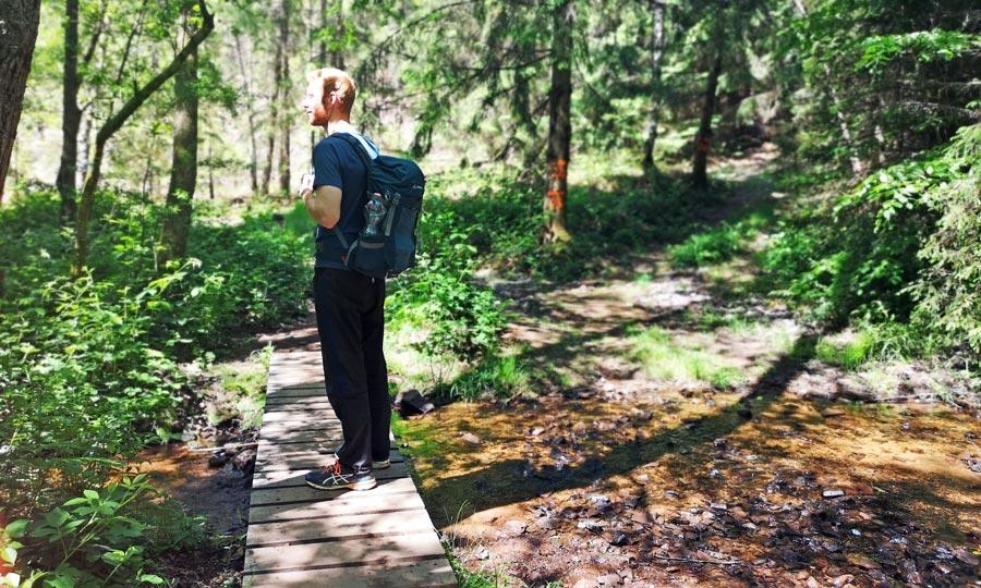 Premiumwanderwege Saarland: Losheim am See, Wald