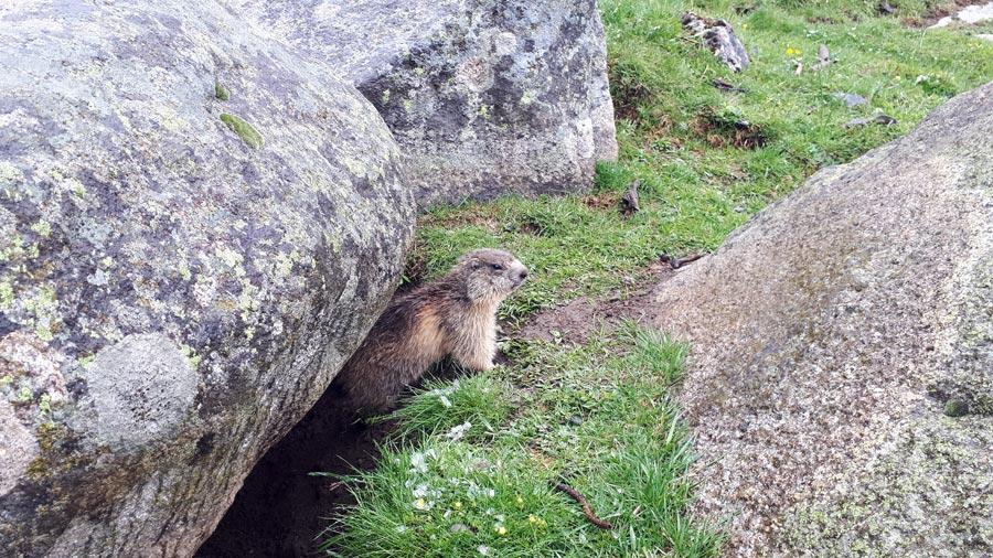 Wandern Pyrenäen: Murmeltiere