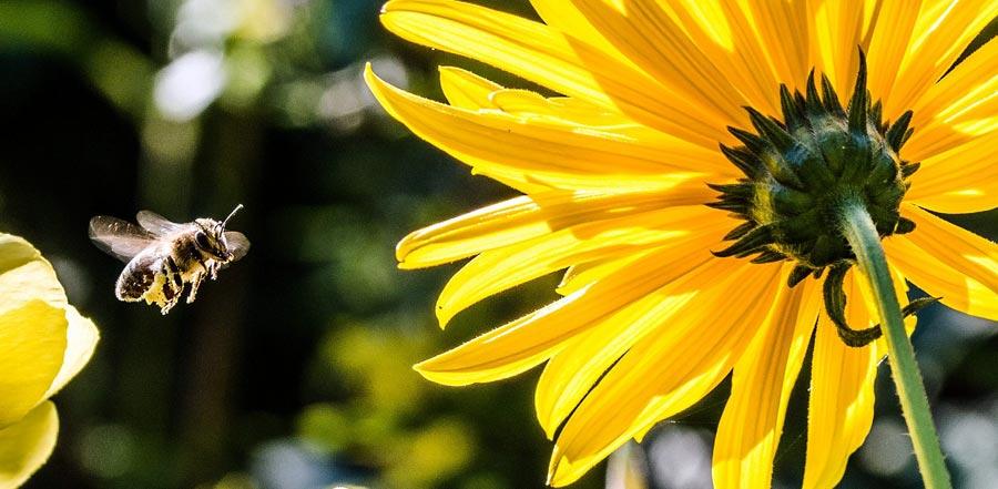 Bienenpatenschaft als nachhaltiges Geschenk, Umweltschutz
