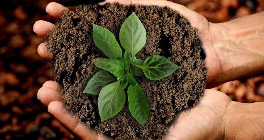 Ökosystem Erde, Nachhaltigkeit, Baum Geschenk