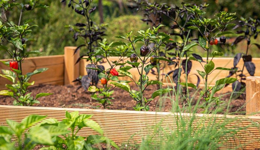 Nachhaltige Geschenkidee: Hochbeet aus FSC Holz