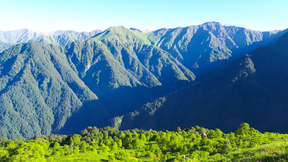 Lagodheki Nationalpark unweit von Sighnaghi