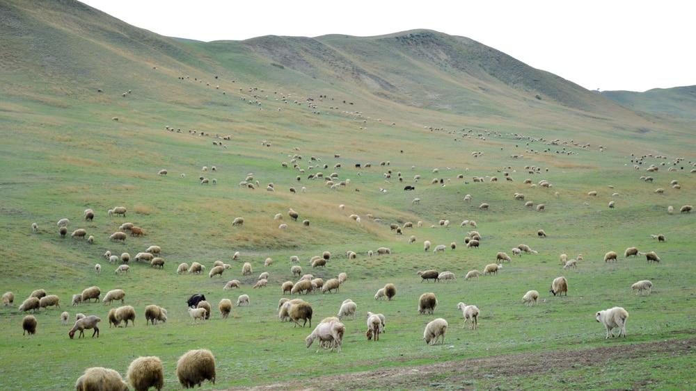 Steppe auf dem Weg zum Dawit Garedscha