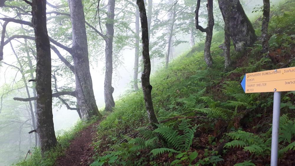 Wald im Lagodekhi Nationalpark