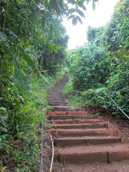 7-Tempel-Wanderung, Dschungel auf Bali