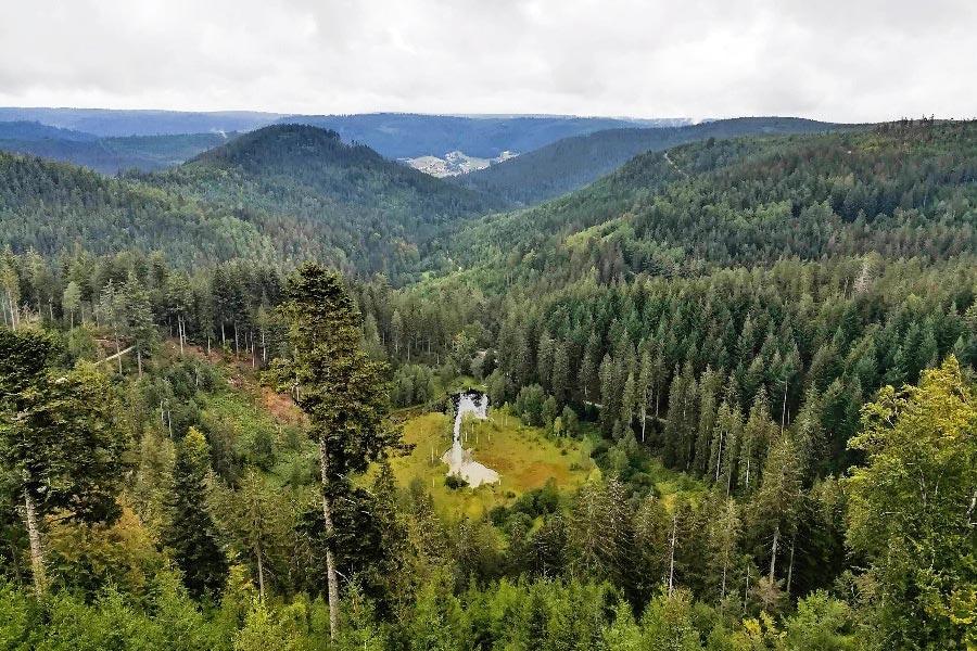 schwarzwald-wandern-ellbachsee-wald