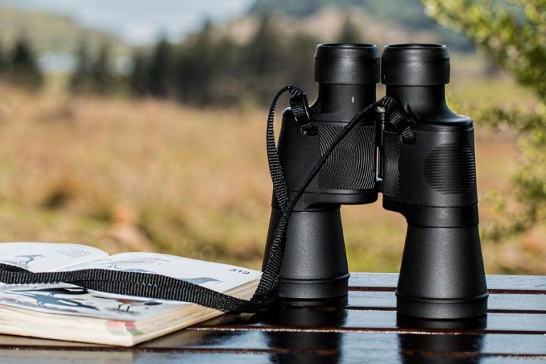 Fernglas zum Wandern: Die besten Modelle + meine Tipps für den Kauf Deines Outdoor-Begleiters
