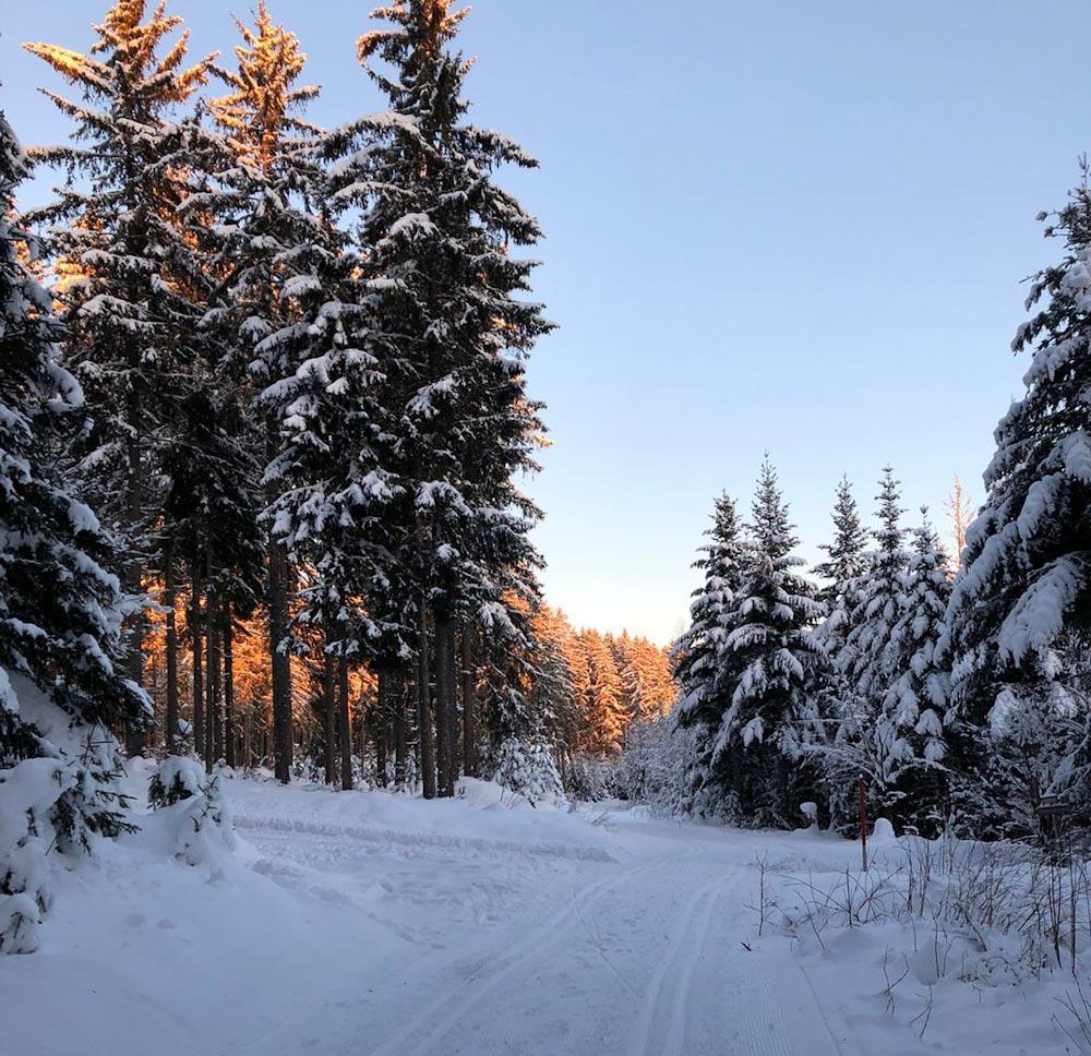 Gespurte Loipe für Langlauf im Schwarzwald