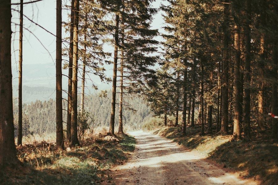 wandern-sauerland-wald-natur