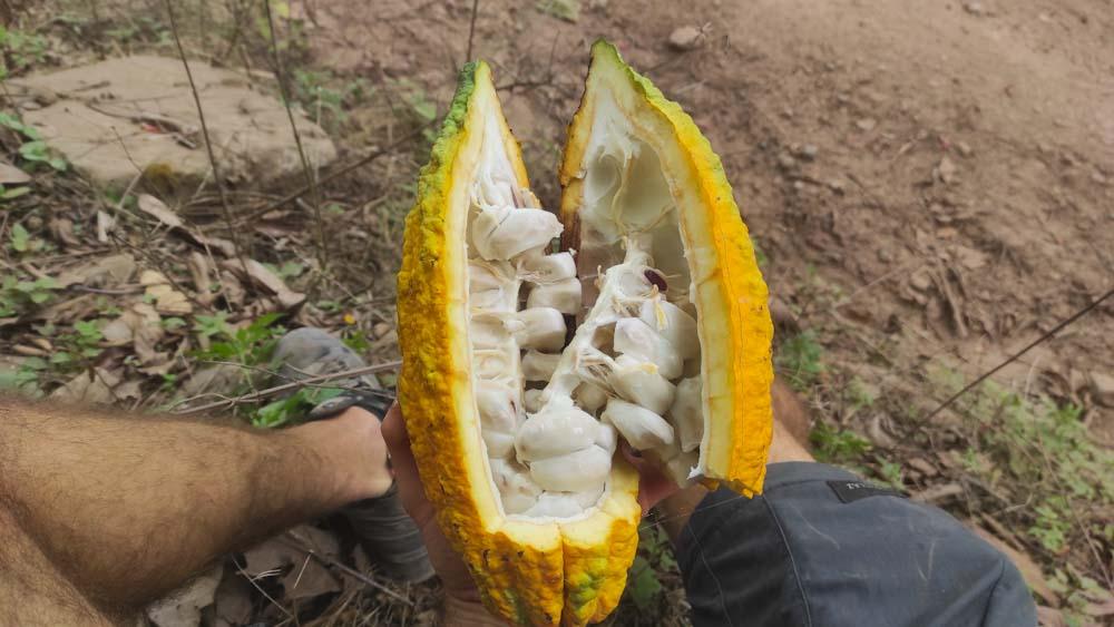kolumbien-sehenswuerdigkeiten-fruechte-kakao